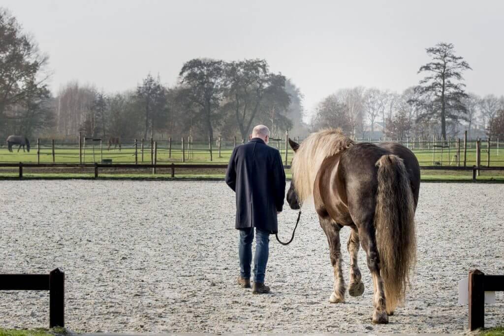 Leren met het paard
